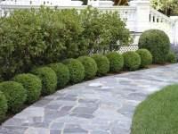 Planting Ideas   Garden Design