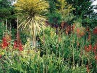 Mediterranean Plants to Grow in Your Garden | Garden Design