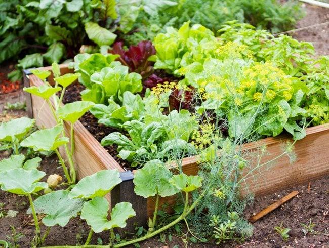 Vegetable Gardening Layout Ideas