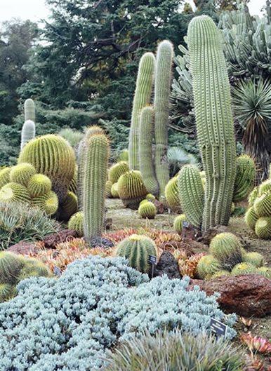 Desert Garden Succulents Amp Cacti Gallery Garden Design