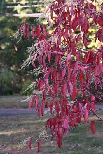 Fall Amp Winter Plants For New England Gallery Garden Design