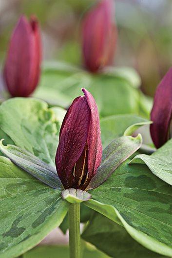 Planting Spring Wildflowers In The Garden Garden Design