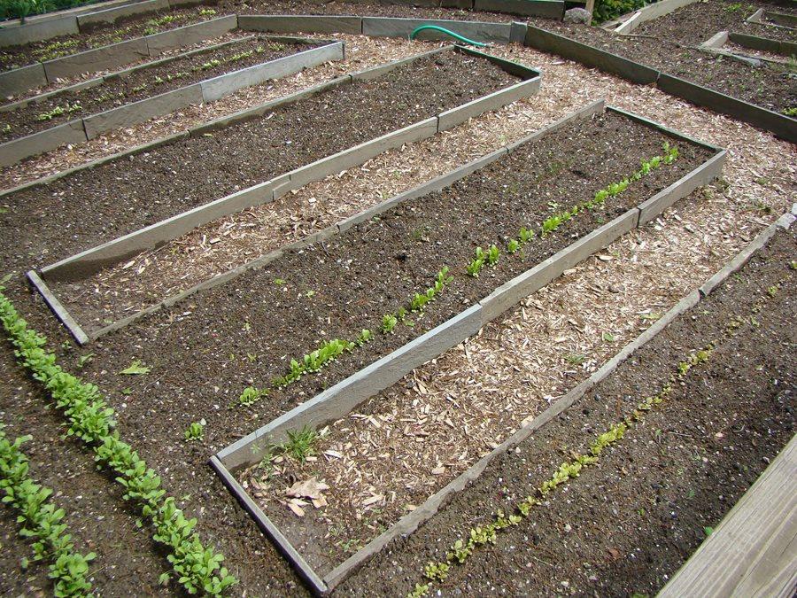 Soil Mixture Vegetable Garden