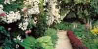 Transform a Small Garden in 7 Simple Steps | Garden Design