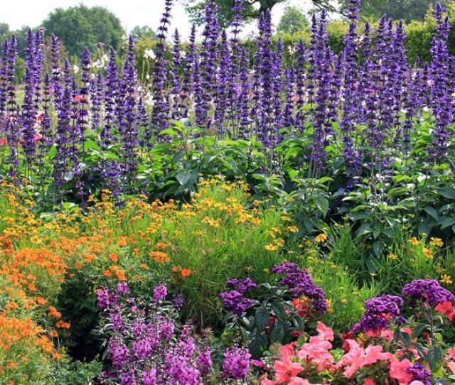 Flowers Garden Purple Spires Garden Design Calimesa Ca