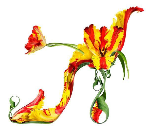 Divine / Parrot Tulip