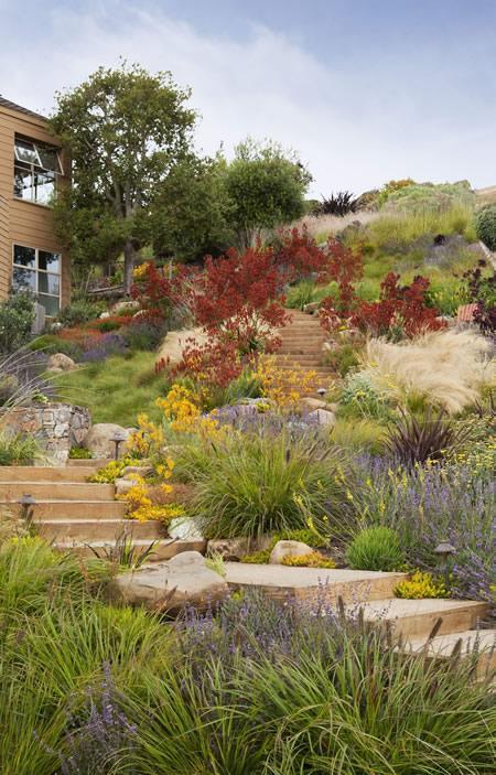 California Hillside Garden - APLD Awards