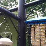 Bird Feeder Pole – Stops Squirrels From Reaching Seed