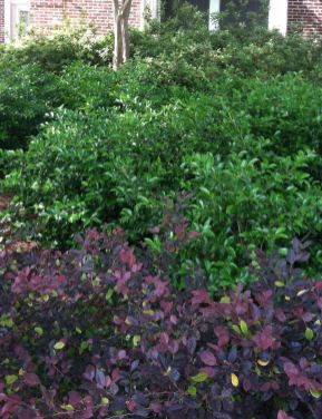 Three types of shrubs create layers underneath the crepe myrtles that add height