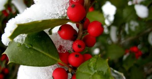 Plants that provide food and shelter in fall and winter for wildlife