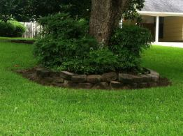 The owners of this tree created a raised bed and added shrubs