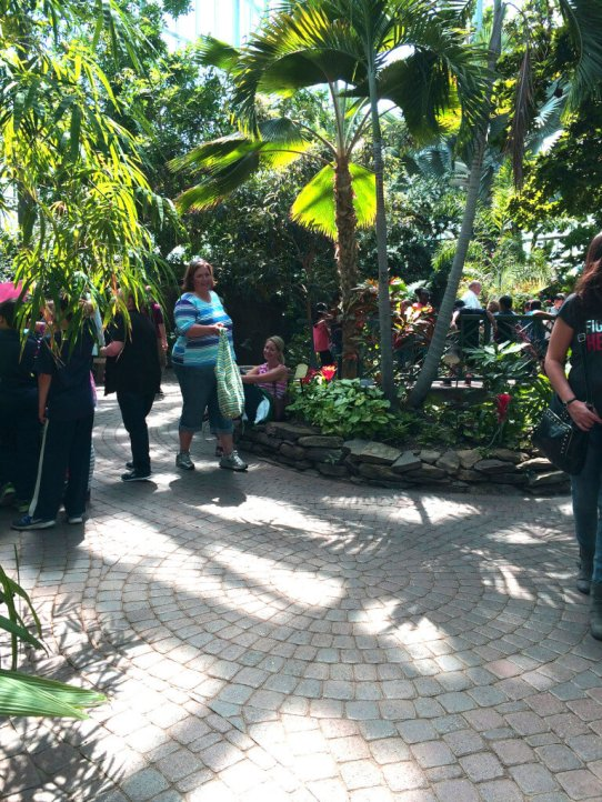 The tropical conservatory