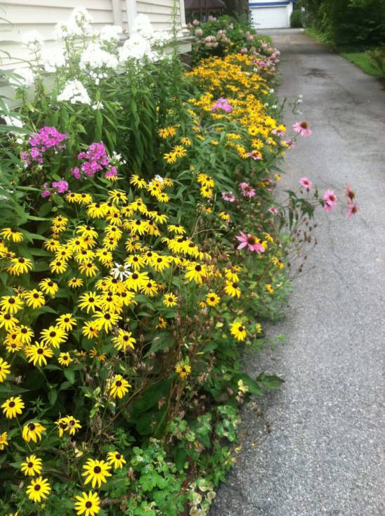 Wildflowers along the Driveway