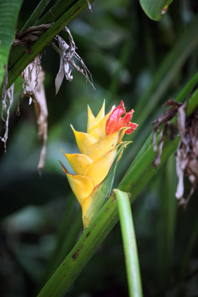 The Flowers Of El Yunque