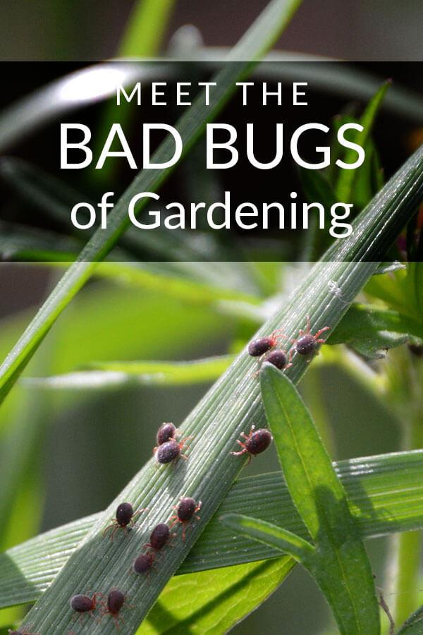 bad-bugs-pinterest