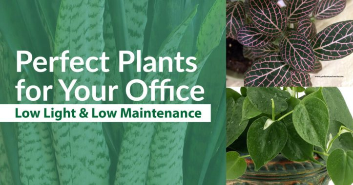 Low Light Plants For Office