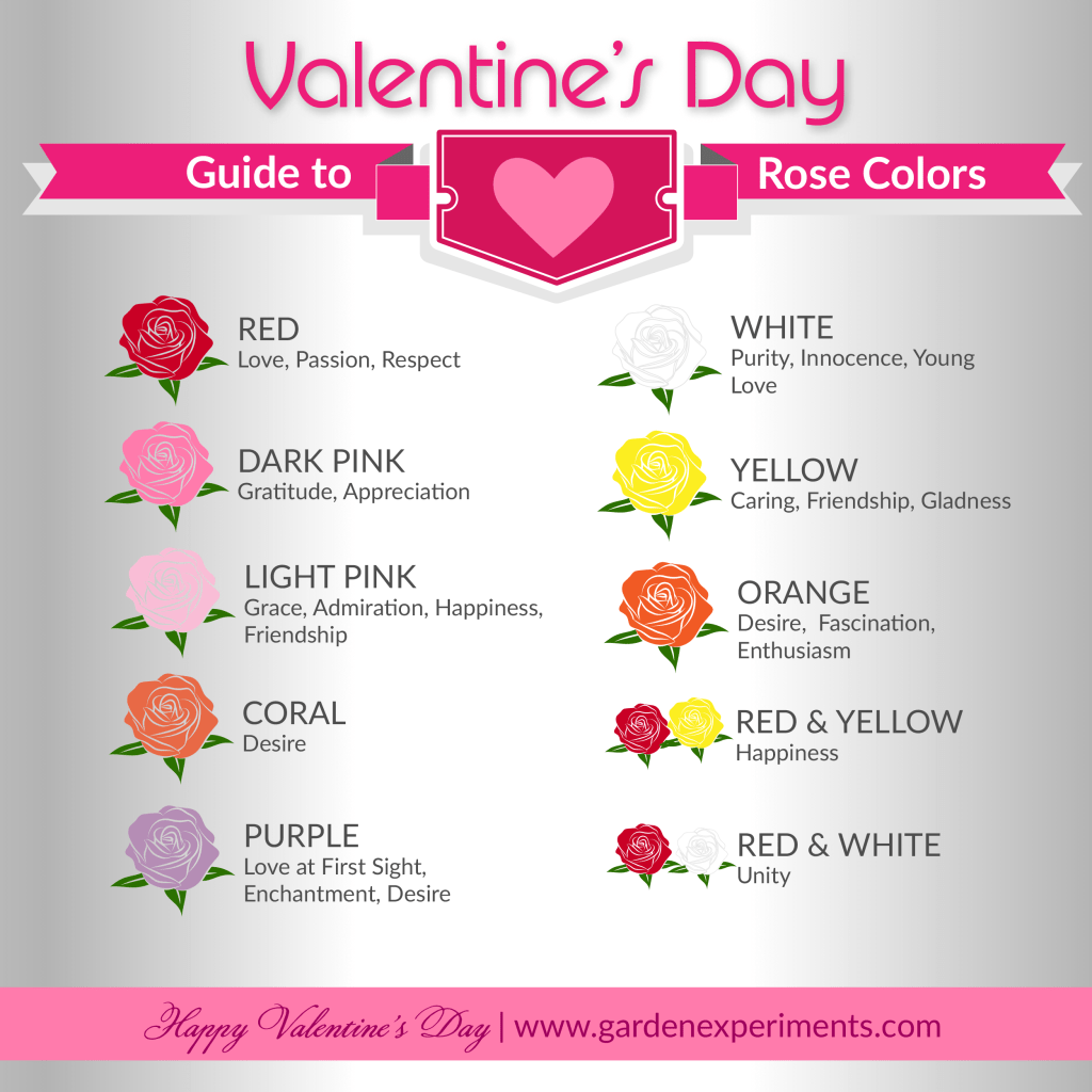 Quick Guide to Rose Colors and What They Mean