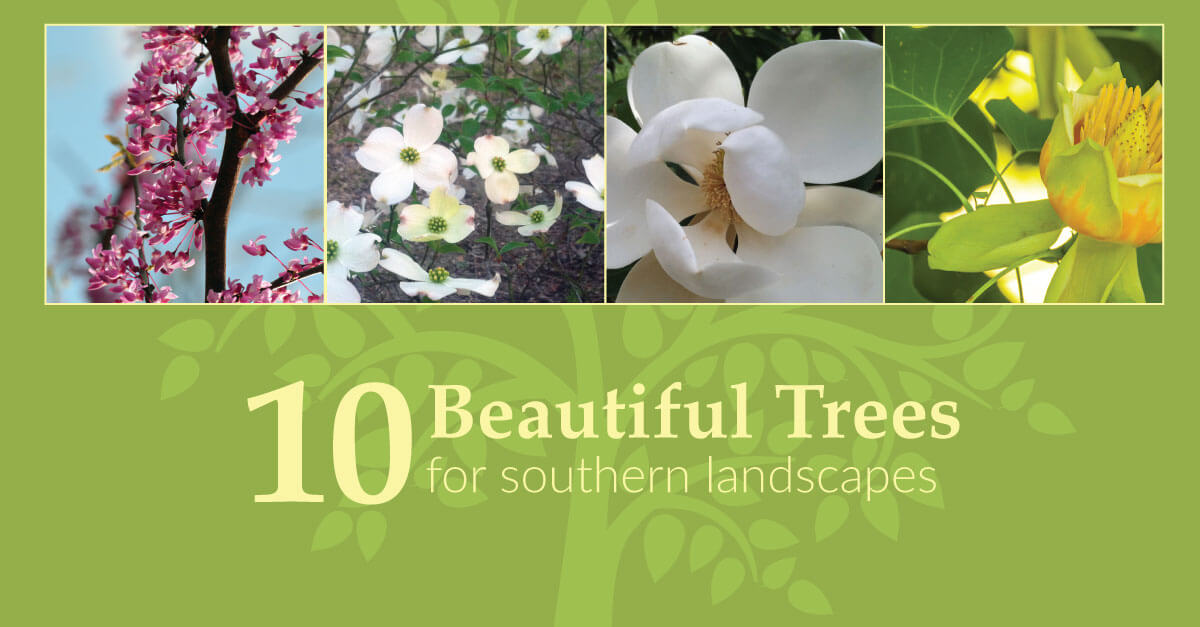 10 Beautiful Trees for Southern Landscapes