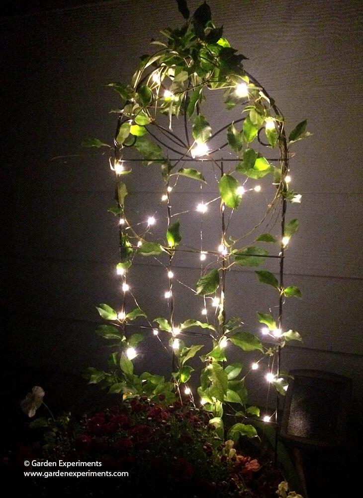 Fall Succulent Wallpaper Adding A Little Magic To My Garden Using Fairy Lights