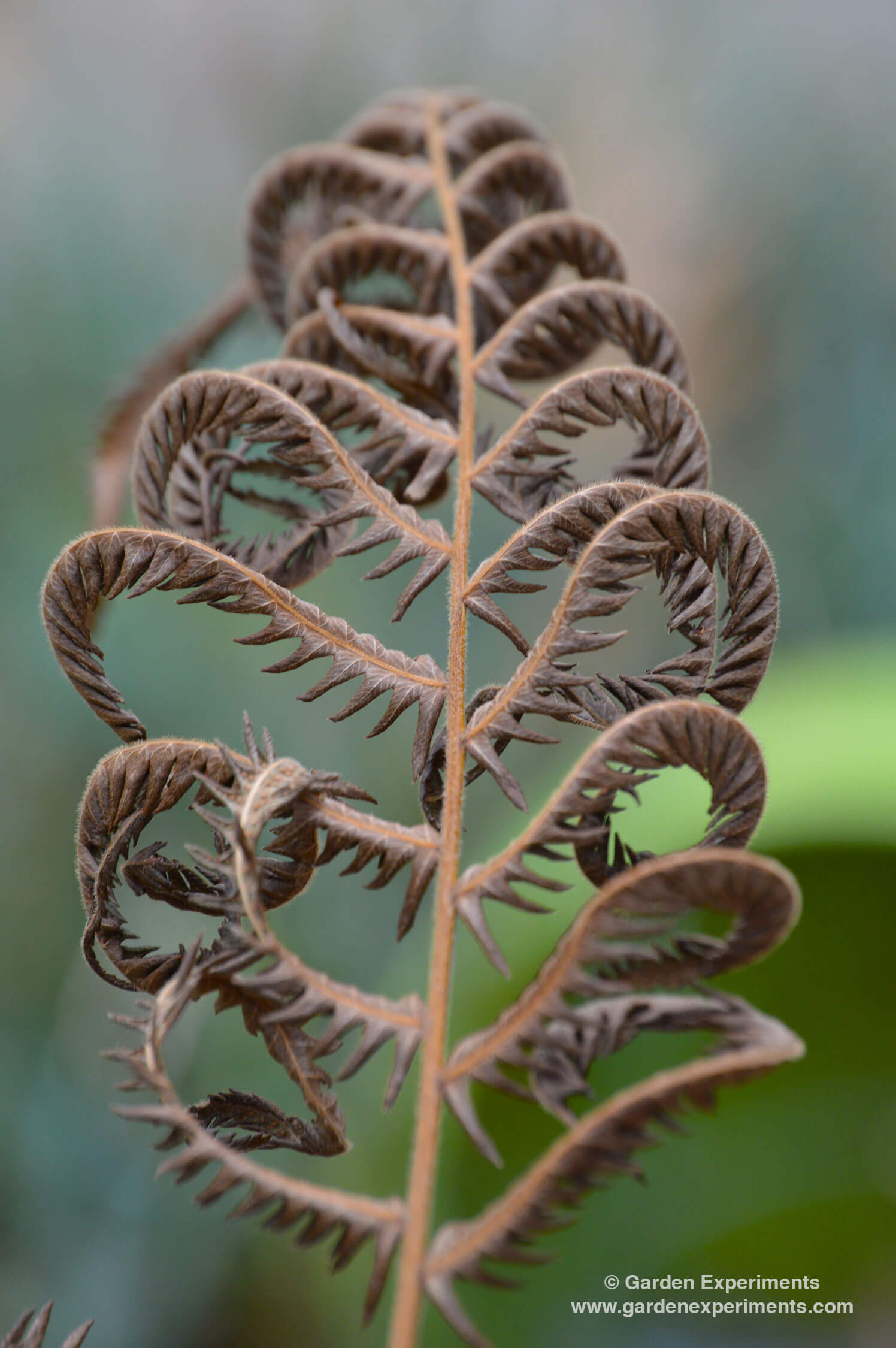 The Beauty of Decay in the Winter Garden - winter makes amazing patterns in the leaves and flowers that it leaves.