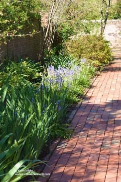 Spring bulbs along the brick pathway