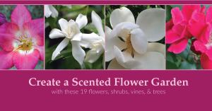 Create a Scented Flower Garden for Year-Round Fragrance