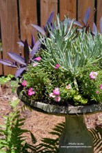 Bird Bath Succulent Planter