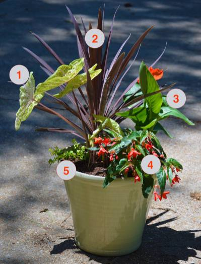 Tropical Container Garden