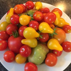 A harvest of tomatoes