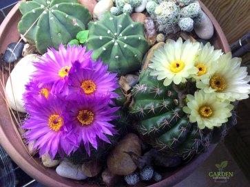 Blooming in winter