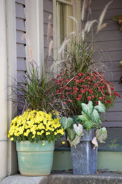 Mums and decorative grasses