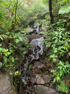 Stream in El Yunque National Forest