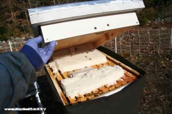 Insulated Inner Cover Beekeeping 101 GardenForkTV DIY