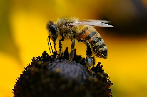 Bees are mostly hairy, have fat legs and short fat bodies.