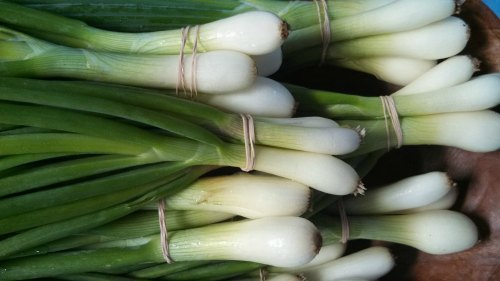 Growing bunching onions