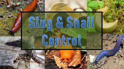 How To Get Rid Of Slugs And Snails In The Garden Garden Fundamentals