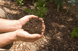Improve Your Soil