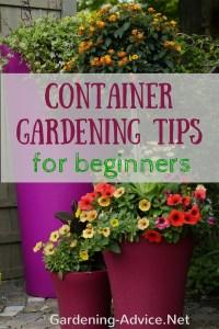 Container Gardening Tips For Beginners