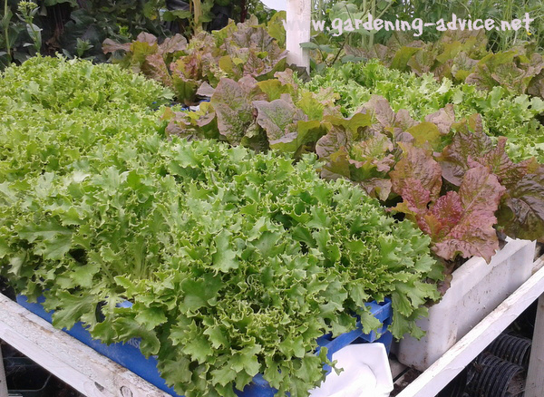 Image Result For What Soil To Use For Growing Vegetables In Containers