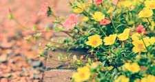狭い庭を広く見せるガーデニング術