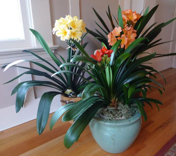 Favorite Vibrant Plants To Grow Indoors During The Winter