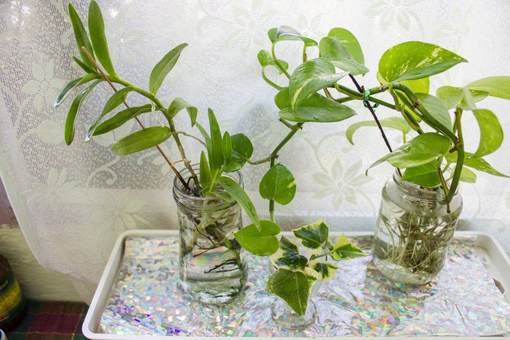 Indoor Plants Grow Water