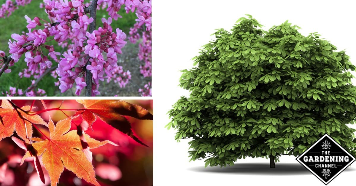 Landscaping Shrubs And Trees Gardening Channel