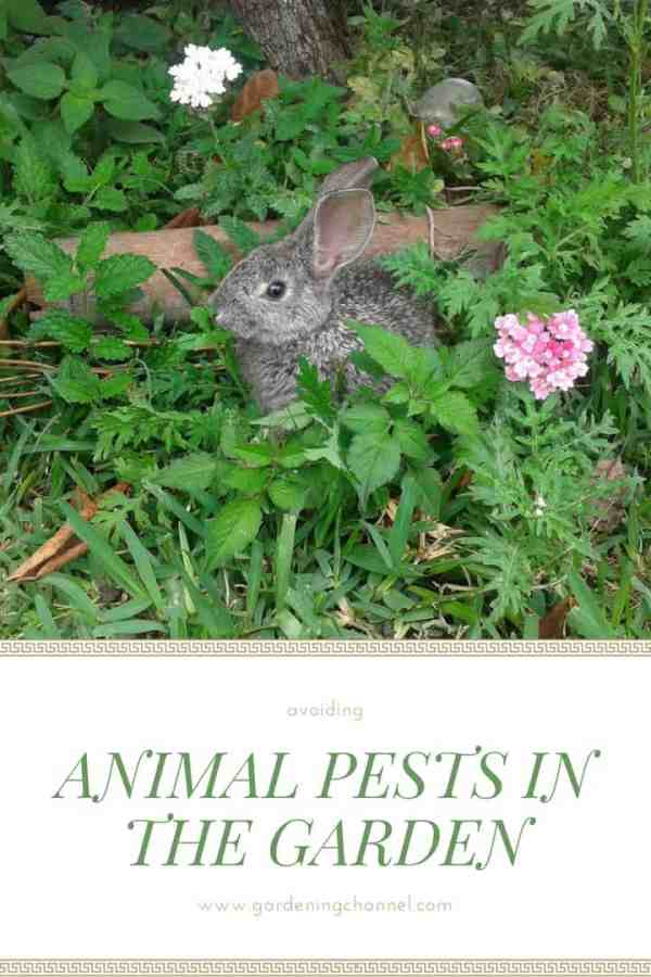animal pests garden