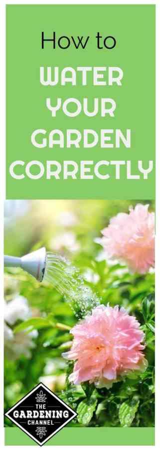 watering your vegetable garden