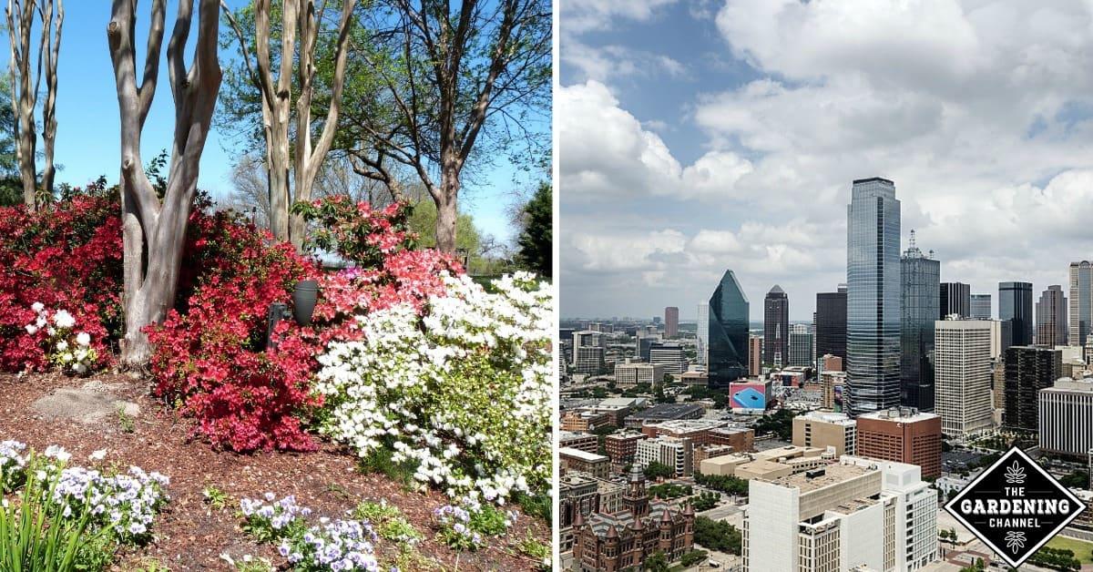 Gardening In Dallas, Fort Worth, Arlington And North Texas