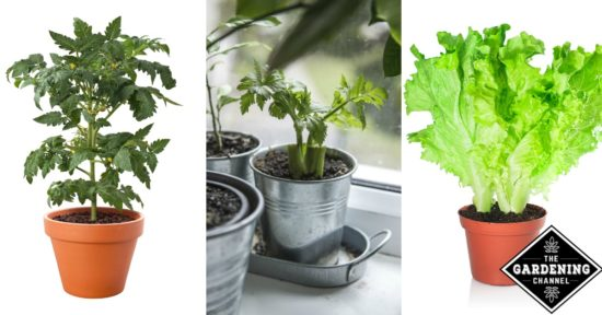 growing vegetables indoors