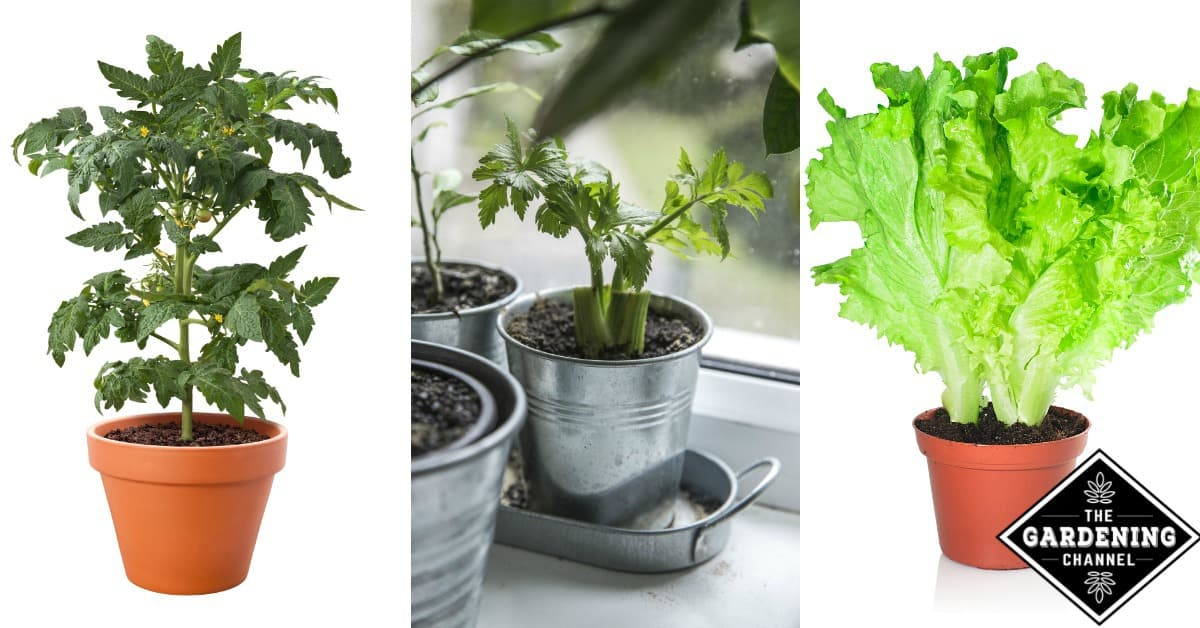 Can You Grow Vegetables Indoors Gardening Channel