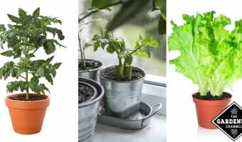 Can You Grow Vegetables Indoors?