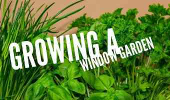 Growing a Kitchen Counter Window Garden